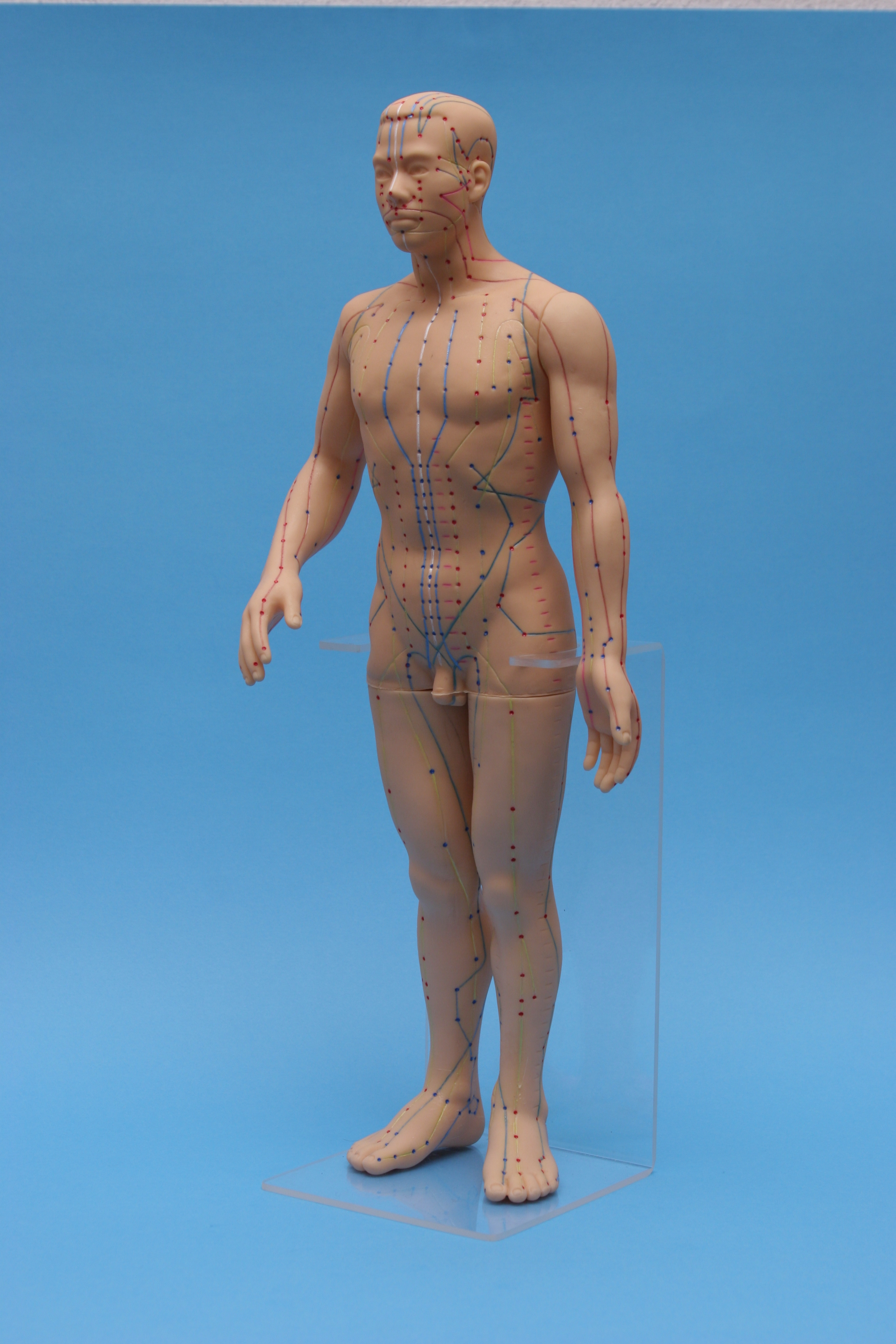 model of man su jok molds su jok needles and acupuncture corporal needles  moxas and massage Su Jok Therapy Association International Su-Jok Therapy Color